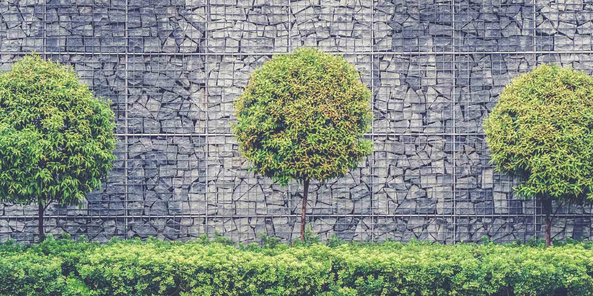 Image trois arbustes