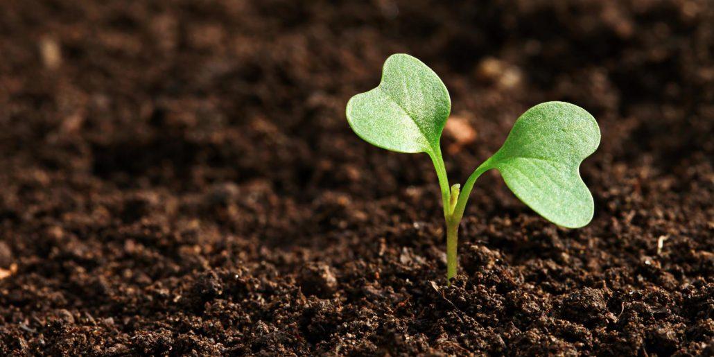 Image terre végétale avec une pousse