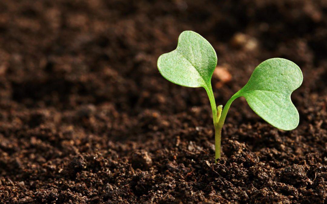 Terre végétale